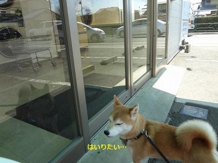 えDSC01151.jpg