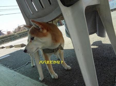 えDSC01153.jpg